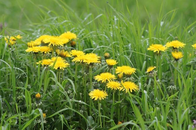 spring-1219760_1920.jpg