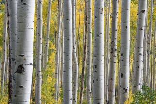 trees-690727_1920