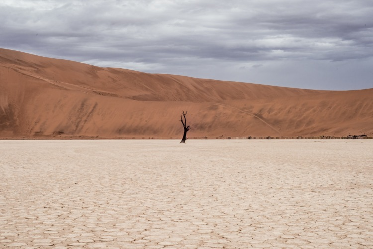 desert-landscape-1081829_1920.jpg
