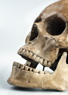 skull-517594_1920